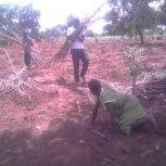 Planting Cassava at Hope Orphan Centre Iganga