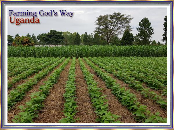 Slider 1 Farming God's Way-2